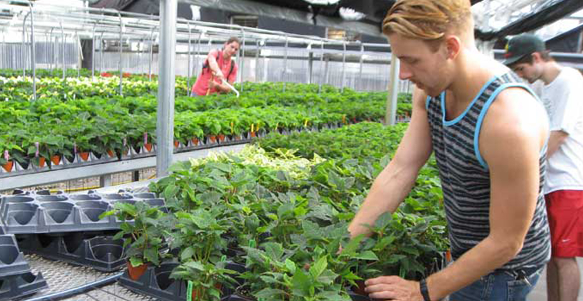 students tend plants in greenhouse