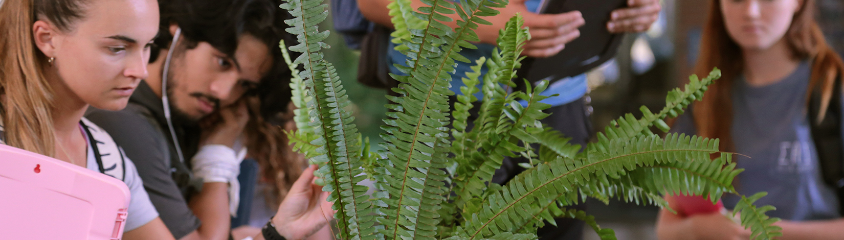 student examines a fern